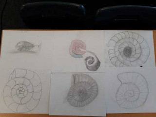 6DP Fossil sketches
